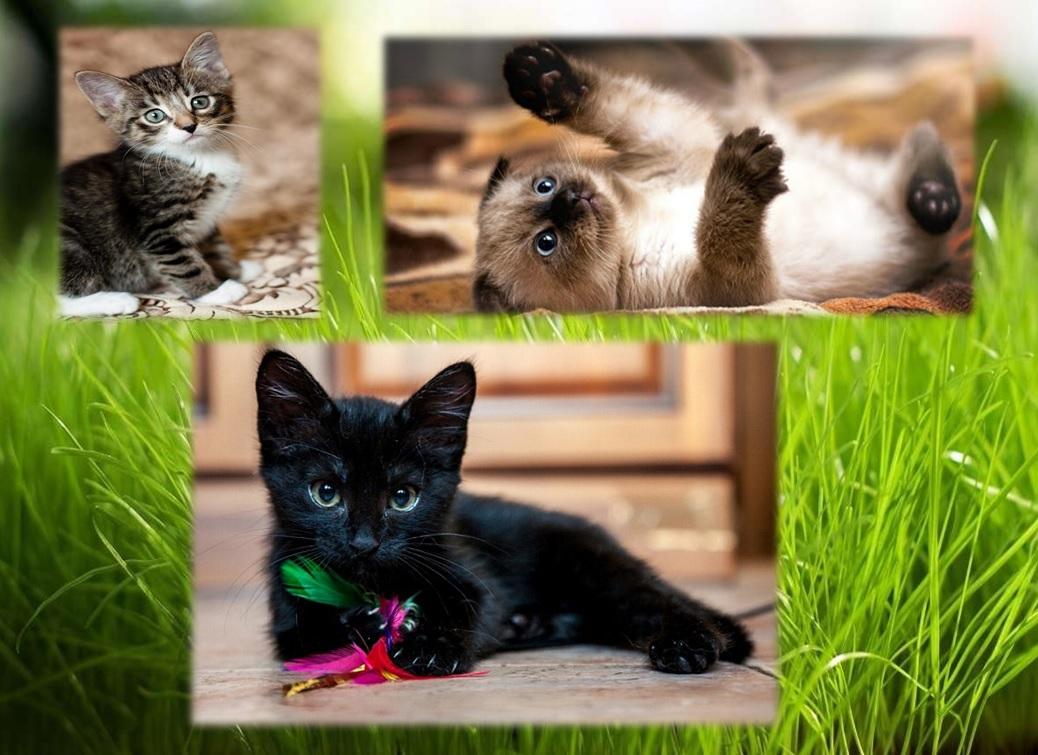 Психологический Тест: Выберите котёнка и узнаете, какая Вы женщина