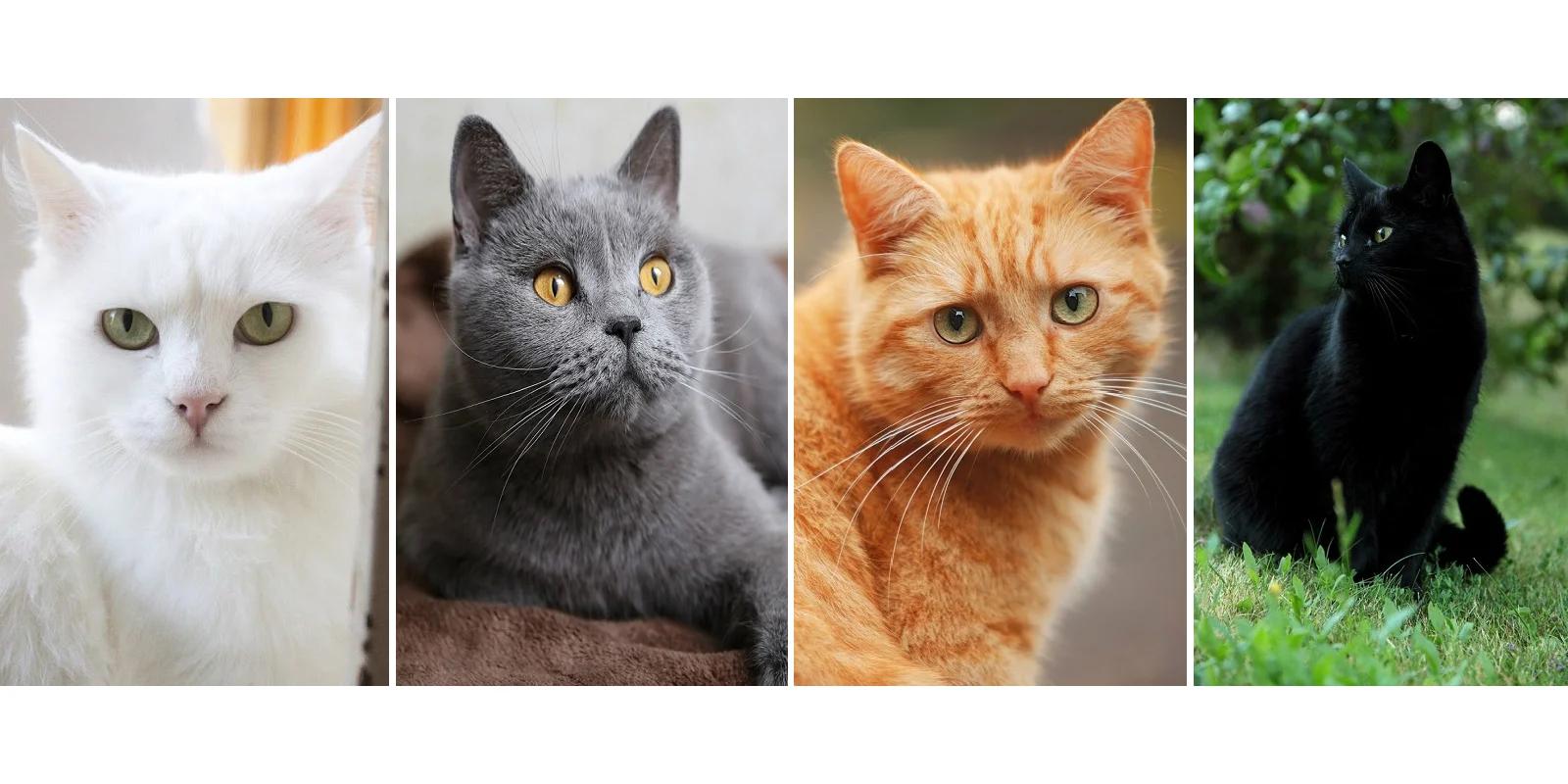 Тест: Выберите цвет кошки и узнаете, что ждет Вас в недалеком будущем