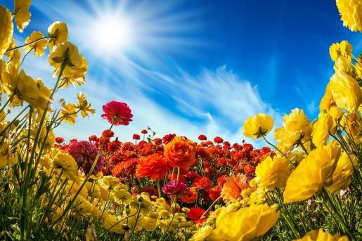 Тест: Выбирайте цветок и узнаете, что говорит Вам внутренний голос