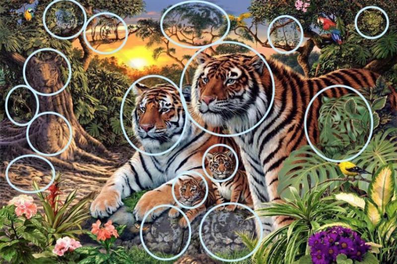 Сможете найти всех тигров на этом изображении