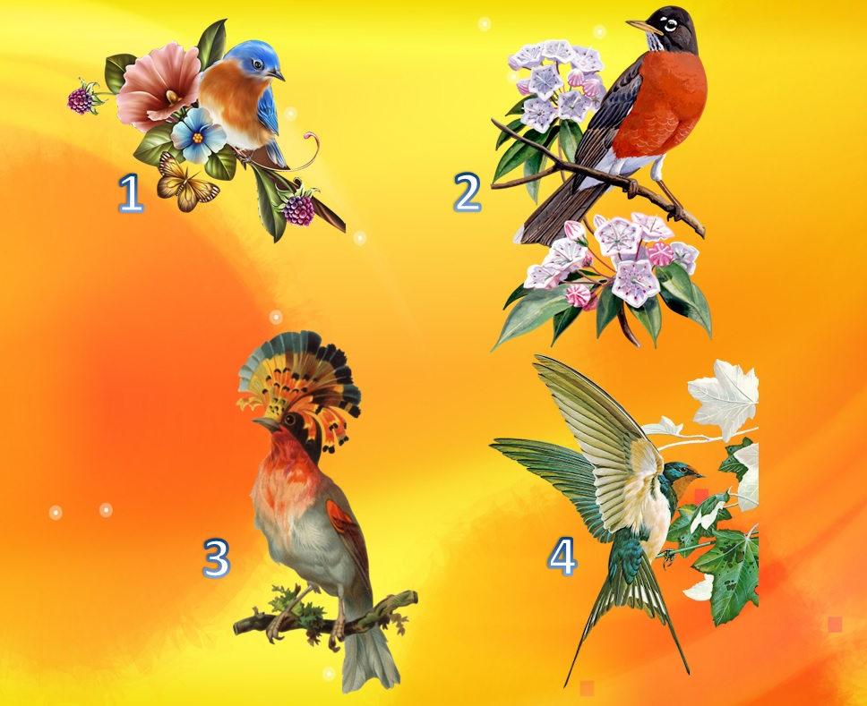 ptica test