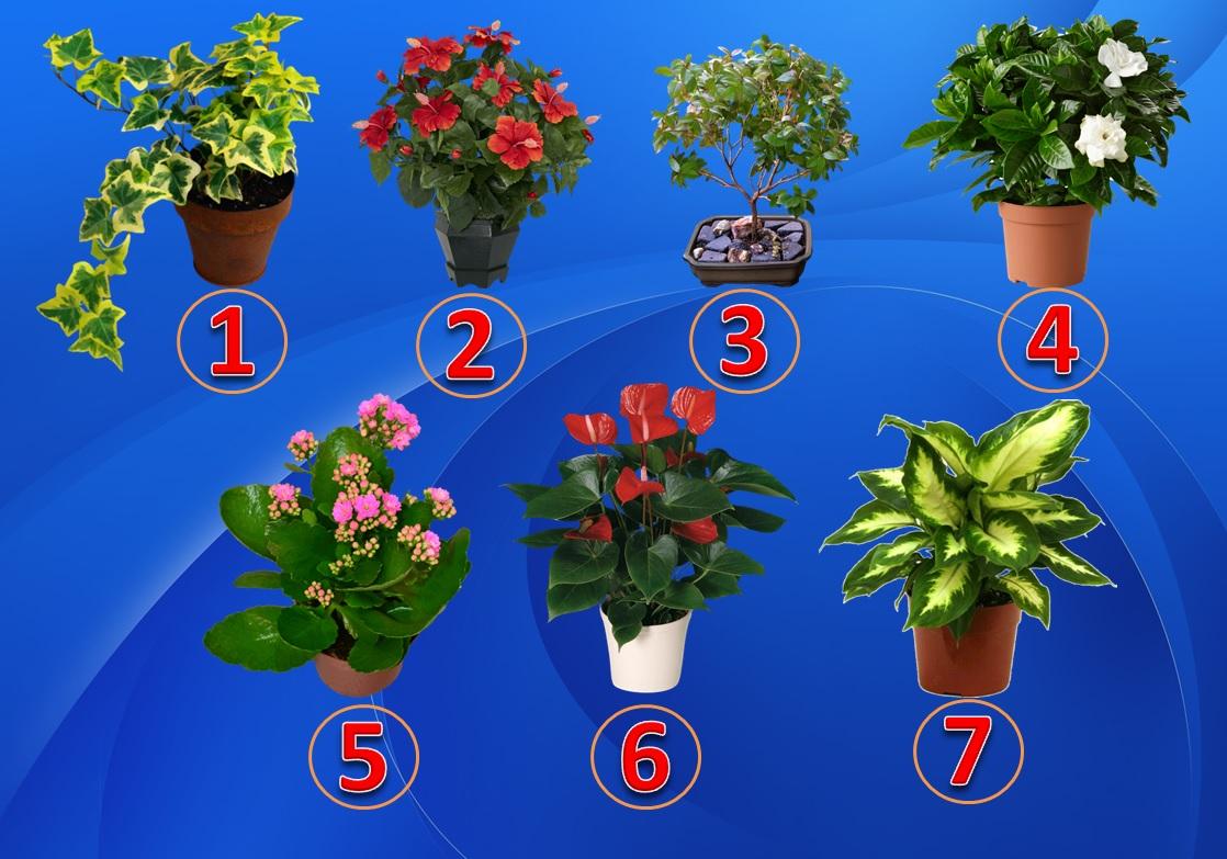 Тест: Выберите растение и узнаете Ваш талант