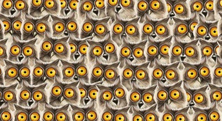 Тест на внимательность: Найдите кота на картинке среди сов