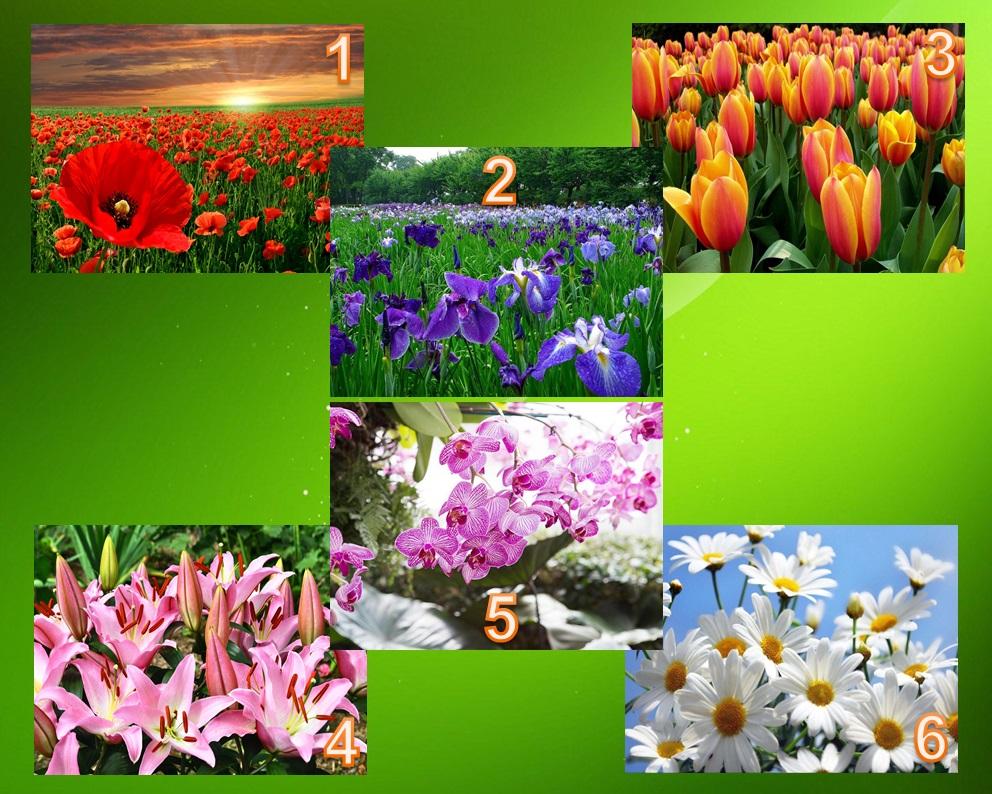 Тест: Выбирайте цветок на изображении и узнаете о себе кое-что интересное
