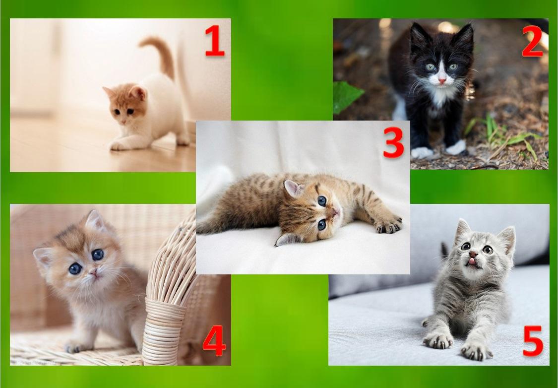 Выберите котенка и узнаете, какой видят Вас окружающие