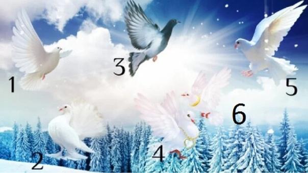 Выберите голубя и узнаете новости, которые он принес о вашем будущем