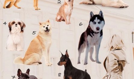 Выберите собаку и узнаете свой характер