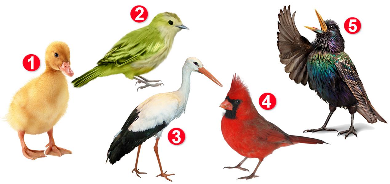 Выбранная птица раскроет вам о жизненных приоритетах