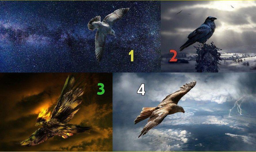 Выберите птицу и узнаете, что вас ожидает в мае