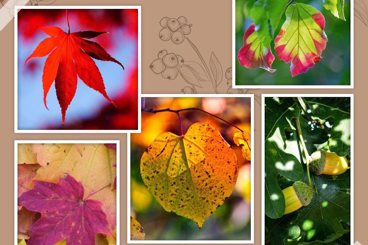 Выбирайте осенний лист на картинке и узнайте, какие черты характера, вам мешают